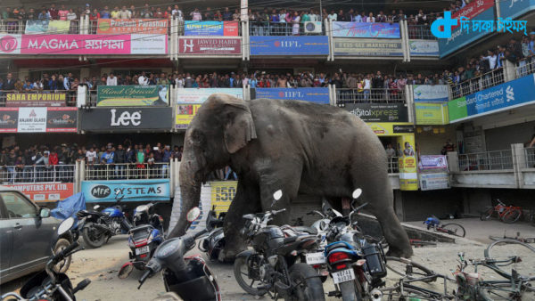 One elephant rampage in city
