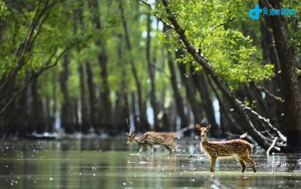 deer and natural beauty of Sundarbans