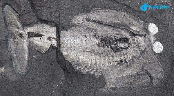 eyes fossil-head