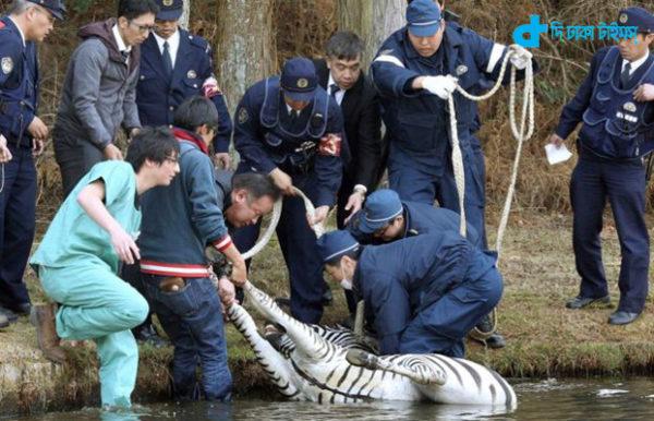 Lake in death of zebra