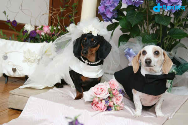 dog wedding guests 5 Thousand