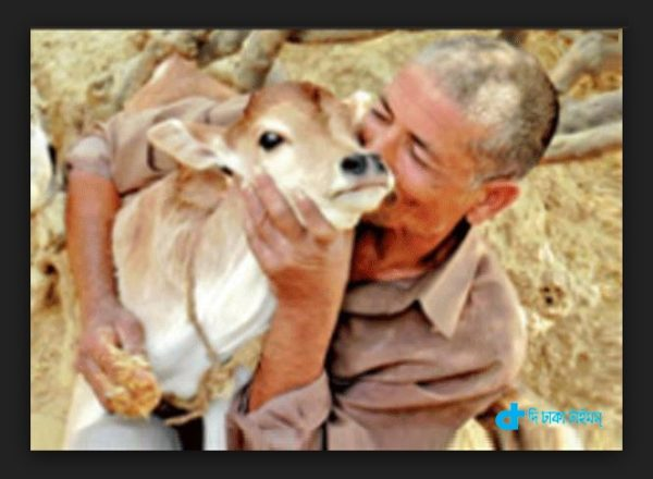 wife, cow & Afaq Ali
