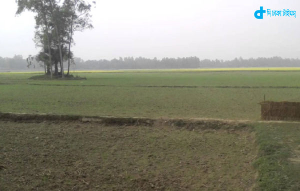Our rural landscapes of Bengal