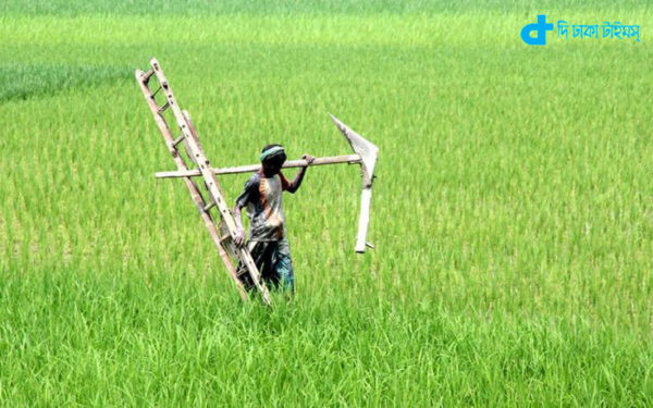 farmers and ladder nangal