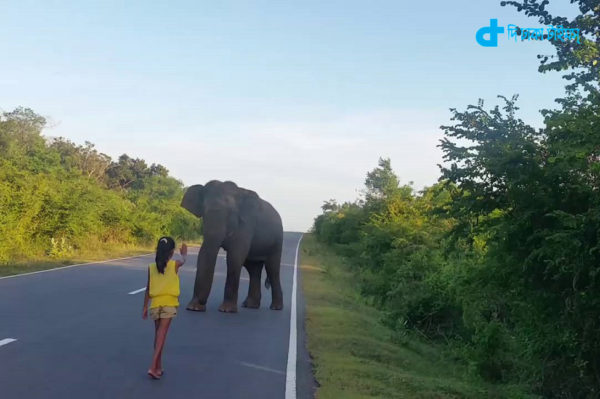 A wild elephant