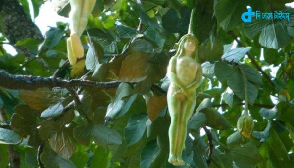it is fruit of tree