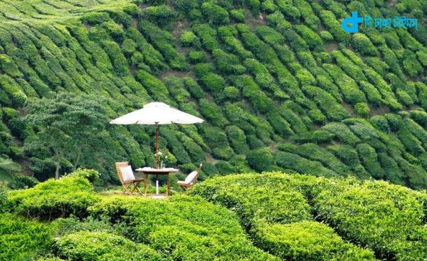 Cameron Highlands Resort Malaysia
