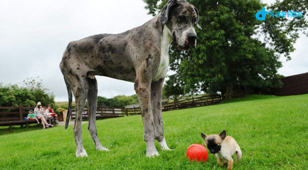 Large dogs and small dogs friendship