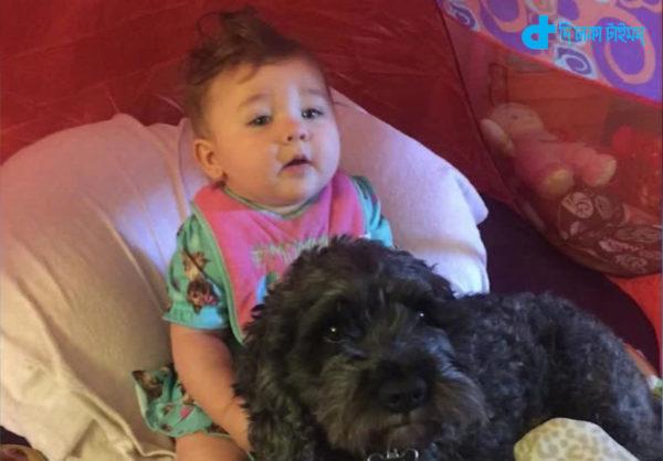 child life and faithful dog