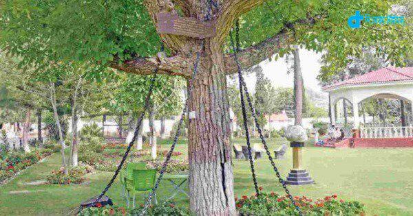 118 years prisoners one trees