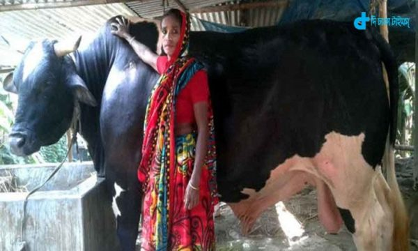 A bull's price of Rs 25 lakh