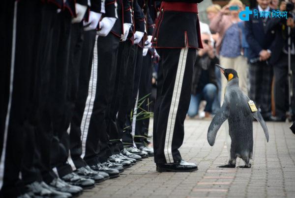 Penguin given rank of brigadier