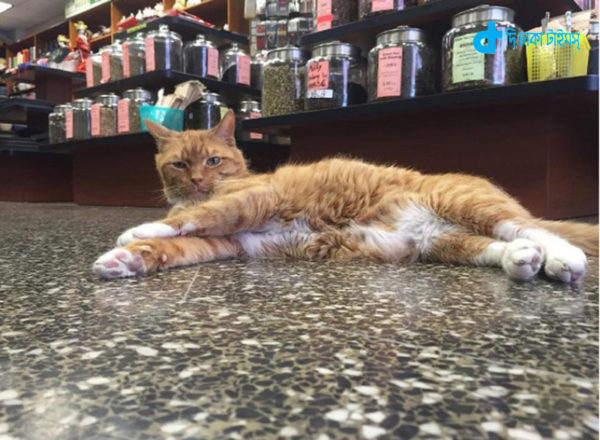 cat-and-shop-3