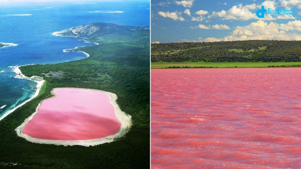 pink-lake-western-australia