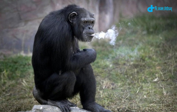 smoking-is-story-of-a-monkey