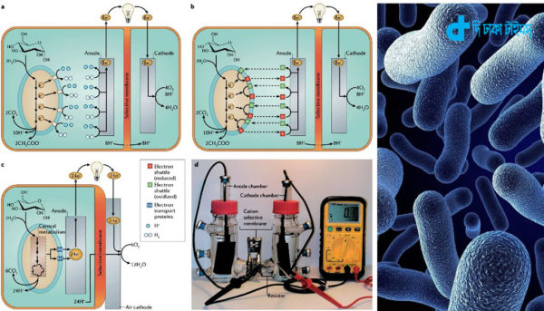 bacteria-will-produce-electricity