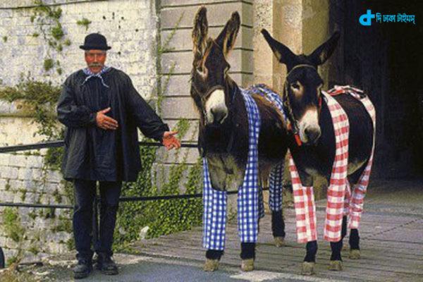 an-island-where-donkeys-wear-pajamas