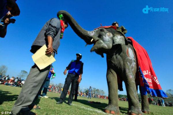 now-elephant-beauty-contest