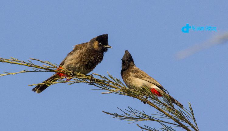 বুলবুলিসহ বাংলাদেশের পাখির তালিকায় মোট ৭৪৪টি পাখি 1