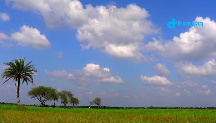 ফসলের মাঠ আর নীল আকাশ: অসাধারণ প্রাকৃতিক দৃশ্য 1