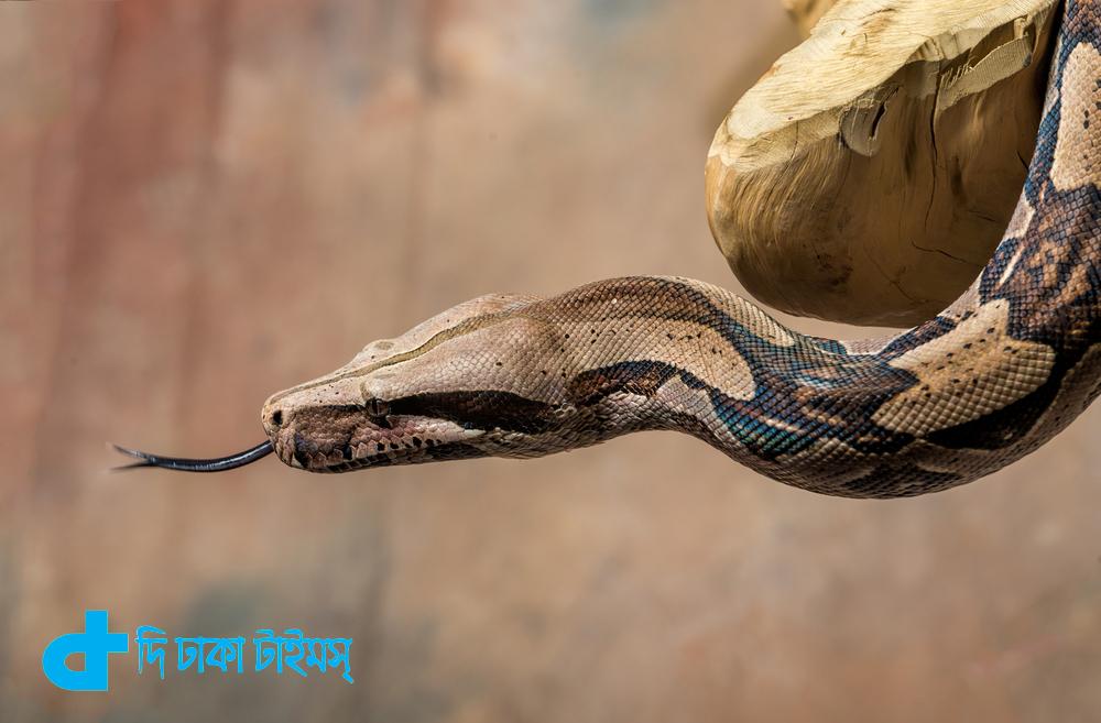 জানার শেষ নেই: চলুন জেনে নেই নতুন আরও কিছু তথ্য 1