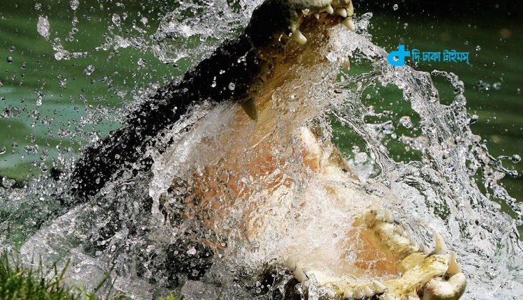 বিভৎস দৃশ্য: স্ত্রীর সামনেই স্বামীকে খেয়ে ফেললো এক কুমির! 1