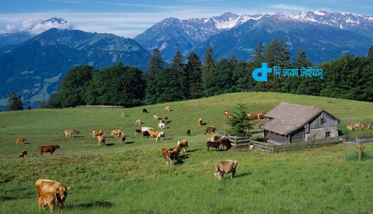 সুইজারল্যান্ডের একটি ফার্ম হাউসের মনোরম প্রাকৃতিক দৃশ্য 1