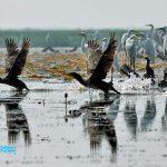 বাইক্কা বিল - মাছ ও পাখির স্থায়ী অভয়াশ্রম 5