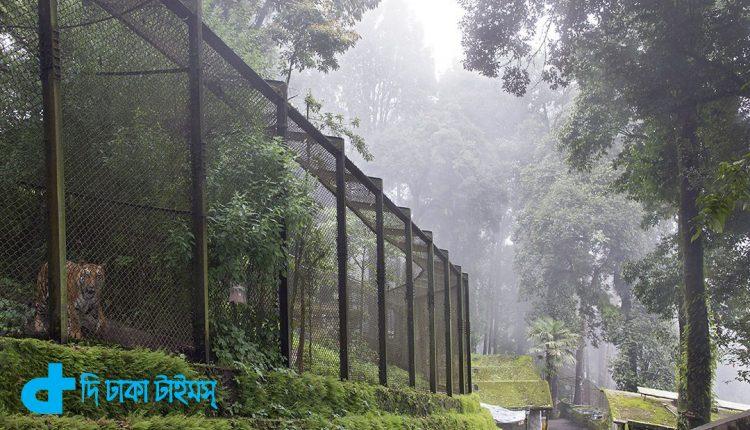 দার্জিলিং হলো শৈল শহরের রাণী 5
