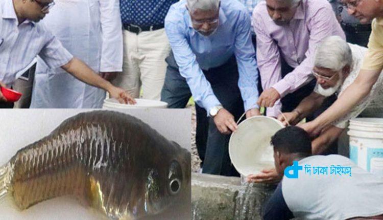 ডেঙ্গু কমাবে 'মশাভুক মাছ'! 1
