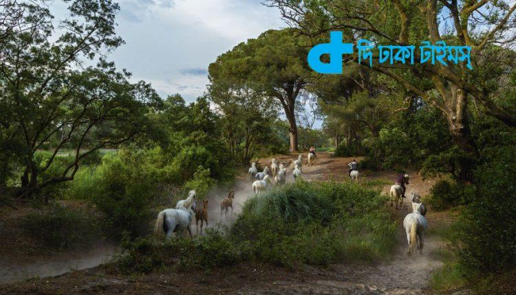 অসম্ভব সুন্দর ফ্রান্সের একটি গ্রাম 1