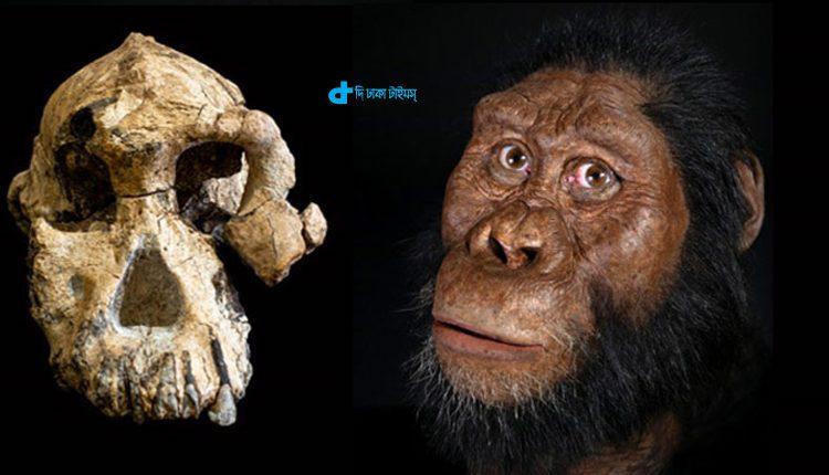 ৩.৮ মিলিয়ন বছর পূর্বের মাথার খুলির সন্ধান! 1