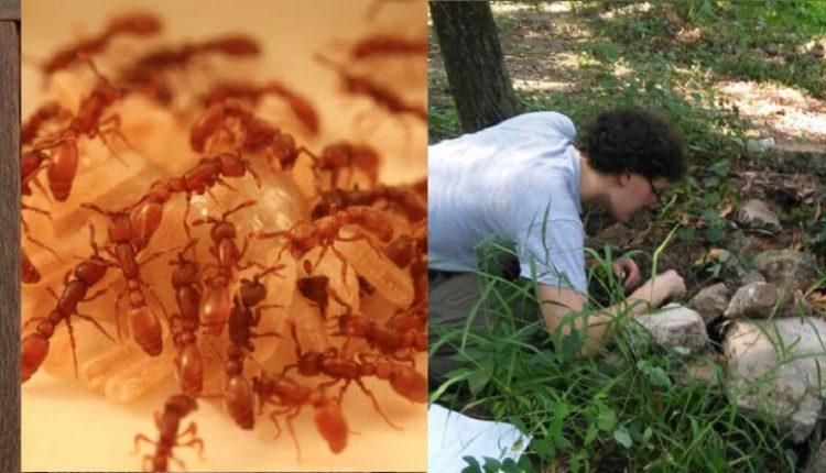 হার্ভার্ড গবেষকরা বাংলাদেশে ভয়ংকর প্রজাতির পিঁপড়ার সন্ধান পেলেন 1