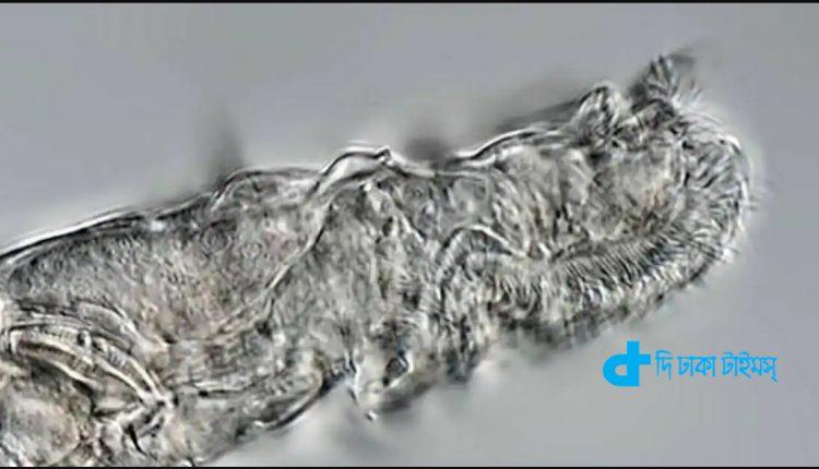 আণুবীক্ষণিক জীব ২৪ হাজার বছর পর প্রাণ ফিরে পেয়েছে 1